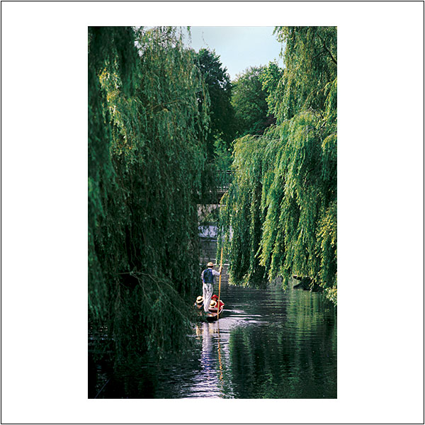 CP0014 Punting Willows