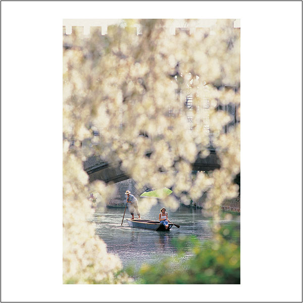 CP0111 Punting Blossom